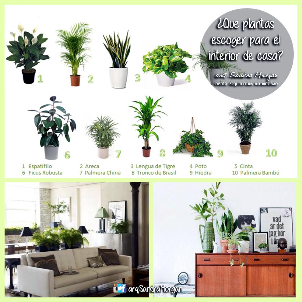 Plantas en la decoraci n interior arq sandra morgan - Decoracion plantas interior ...