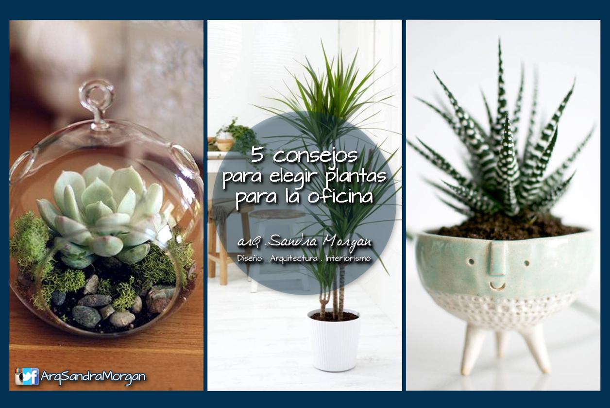 5 consejos para escoger plantas de interior para tu for Decoracion de oficinas con plantas